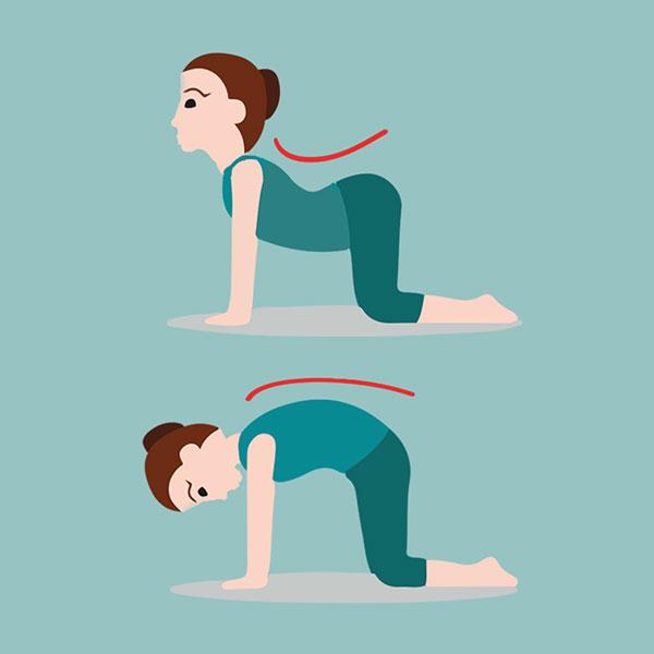 Tư thế Yoga con mèo - con bò