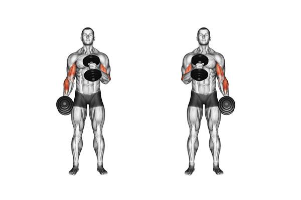 Bài tập Gym giảm cân Alternate Hammer Curl