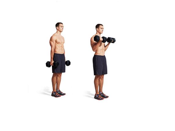 Bài tập Gym giảm cânDumbbell Biceps Curls