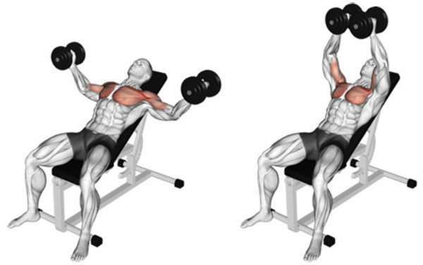 Bài tập Incline Dumbbell Flyes
