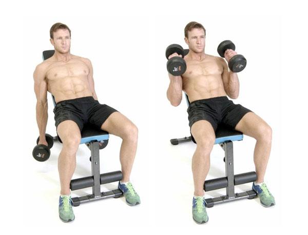 Incline Hammer Curl hỗ trợ cơ bắp tay to cuồn cuộn