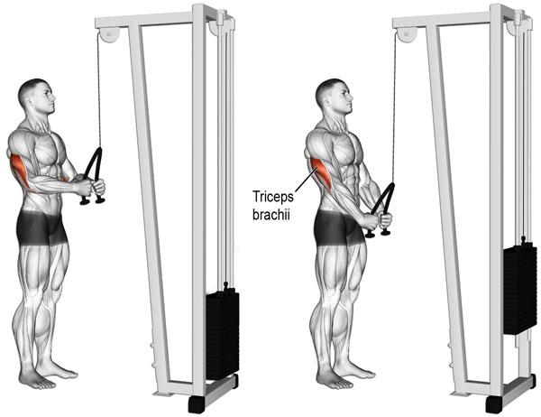 Tập Triceps Pushdown ở phòng Gym giúp nam giới cải thiện cơ bắp tay sau