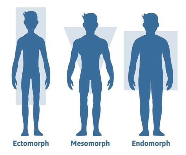 Đặc điểm của tạng người ectomorph.