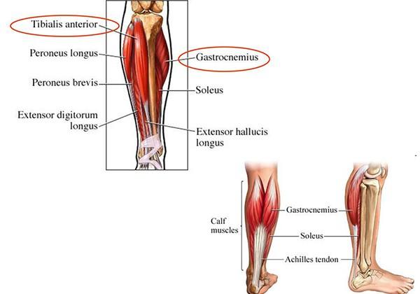 Nhóm cơ bắp chân