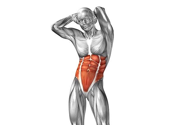 Các nhóm cơ trên cơ thể và nguyên tắc cần biết khi tập thể hình