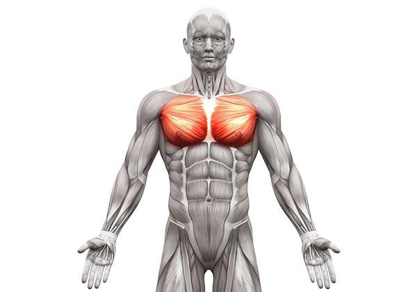 Nhóm cơ ngực