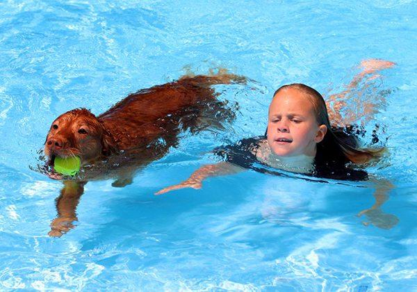 Kiểu bơi chó