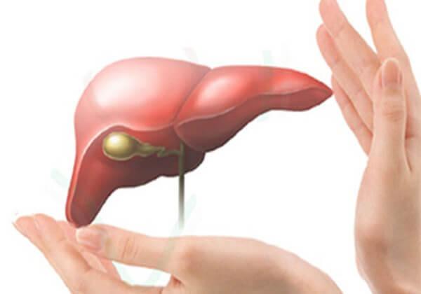 Lẹcithin giúp đào thải độc tố trong gan.