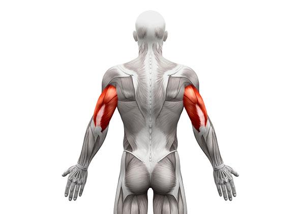 Triceps là gì? Các bài tập Triceps cơ bản và hiệu quả cao nhất?