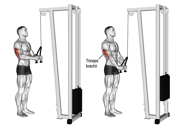 Rope Triceps Pushdown