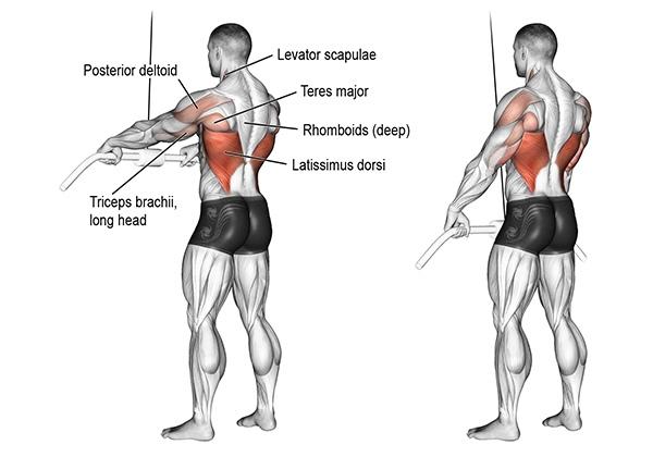 Straight Arm Pulldown là gì? Hướng dẫn cách tập cho Gymer?
