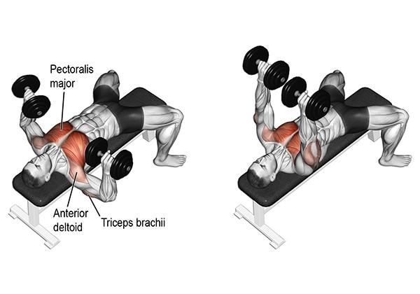 Dumbbell Bench Press - Bài tập ngực với tạ đơn tốt cho Gymer