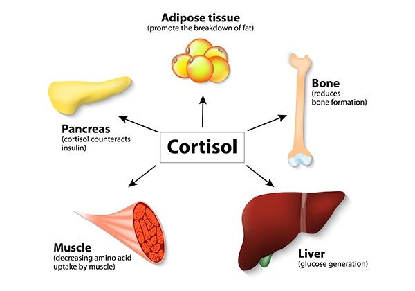 Tầm quan trọng của Cortisol
