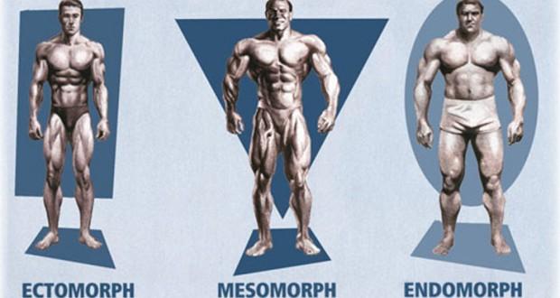 Sai lầm về 3 tạng người thể hình cơ bản của các Gymer mới !