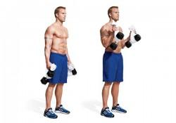 Các bài tập cẳng tay tại nhà hiệu quả tốt nhất cho dân tập Gym